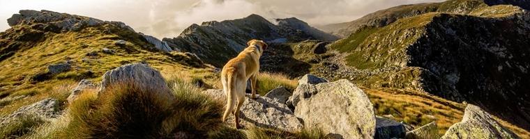 Image illustrant l'article Pourquoi souscrire à une assurance pour votre chien ?