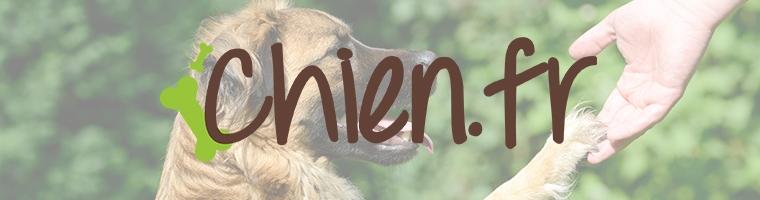 Image illustrant l'article Tout ce qu'il faut savoir du monde canin avec Chien.fr