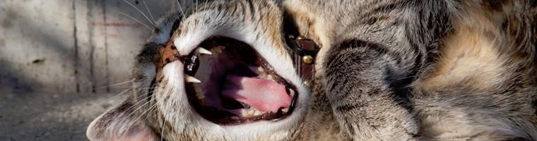 Image illustrant l'article La mutuelle pour les chats, le reflexe à adopter !