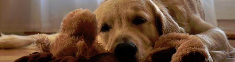 Image illustrant l'article La différence entre mutuelle et responsabilité civile pour votre chien ?