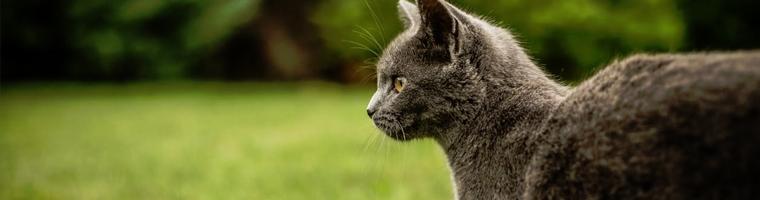 Image illustrant l'article L'assurance pour votre chat, une solution économique